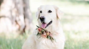 Hund bringt Ringe